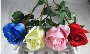 Blue White Pink Red Valentines Day Roses